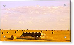 Fields Of Plenty Acrylic Print by Kate Purdy