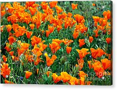 Acrylic Print featuring the photograph Fields Of Poppies by Johanne Peale