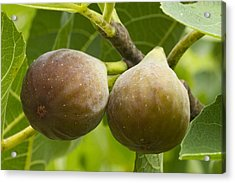 Acrylic Print featuring the photograph Figs by Carrie Cranwill