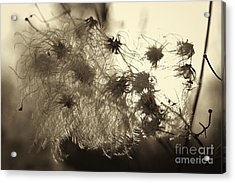 Acrylic Print featuring the photograph Filaments by Eunice Gibb