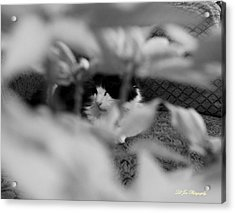 Acrylic Print featuring the photograph Find The Kitty by Jeanette C Landstrom