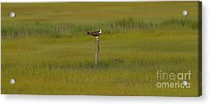 Find Your Center Acrylic Print by Michael Rucci