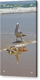 Finders Keepers Acrylic Print by Betsy Knapp