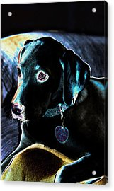 Fine Art Puppy Portrait Acrylic Print