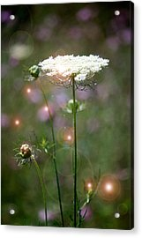 Acrylic Print featuring the photograph Fine Lace And Fairies by Penny Hunt
