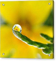Finger Tip Flower Acrylic Print