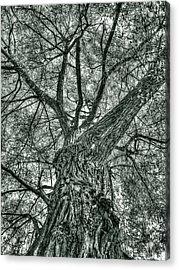 Finkles Landing Tree Acrylic Print