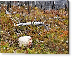 Fire And Fall Acrylic Print by Susan Kinney