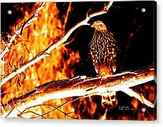 Fire Hawk 0112 Acrylic Print