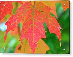 Fire Leaf Acrylic Print by Mandi Howard