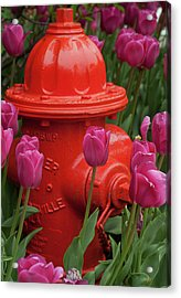 Fire Plug And Tulips Acrylic Print