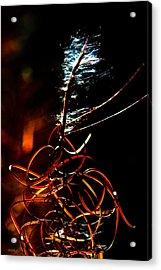 Fireweed Acrylic Print by Mitch Shindelbower