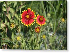 Acrylic Print featuring the photograph Firewheel by Lynnette Johns