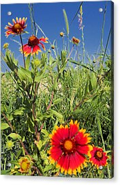 Acrylic Print featuring the photograph Firewheels Galour by Lynnette Johns
