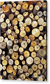 Firewood Acrylic Print by Carlos Caetano