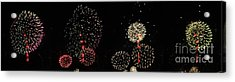 Firework Lifecycle 3 Acrylic Print by Meandering Photography