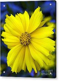 Firey Yellow Flower Acrylic Print