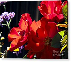 First Blooms Acrylic Print by Leslie Hunziker