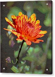 First Mum For Fall Acrylic Print by Sandi OReilly