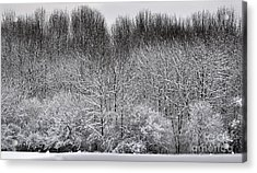 First Snow Acrylic Print by Diane E Berry