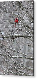 First Snow Fall Acrylic Print by Kume Bryant