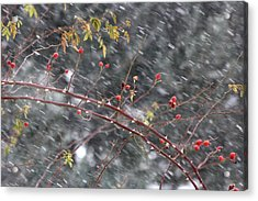 First Snow... Acrylic Print by Frederic Vigne
