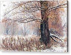 First Snow. Old Tree Acrylic Print by Jenny Rainbow