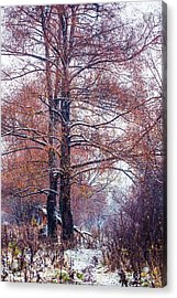 First Snow. Winter Coming Acrylic Print by Jenny Rainbow
