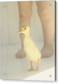 First Steps Acrylic Print by Amy Tyler