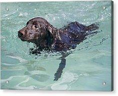 First Swim Acrylic Print