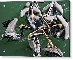 Fish Fight Acrylic Print by Paulette Thomas