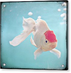 Fish In The Sea Acrylic Print by photo by Anna Theodora