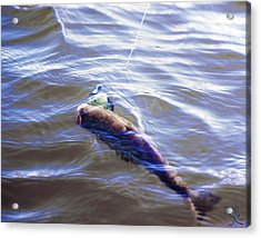 Fish In The Water Acrylic Print by Kelly Rader