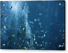 Fish Menagerie Acrylic Print