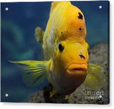 Acrylic Print featuring the photograph Fish by Milena Boeva