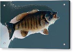 Fish Mount Set 10 B Acrylic Print by Thomas Woolworth