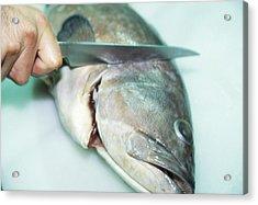 Fish Preparation Acrylic Print by Cristina Pedrazzini