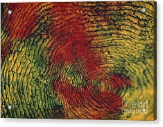 Fish Scale Acrylic Print by Eric V. Grave