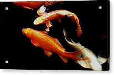 Fish Swimming Acrylic Print by Don Mann