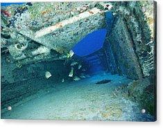Fish Swimming In Shipwreck, Tortola Acrylic Print by Joe Stancampiano