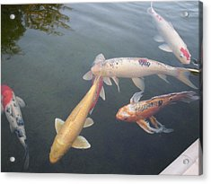 Fish Swimming Acrylic Print by Val Oconnor