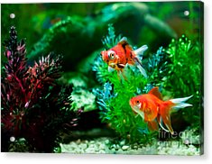 Acrylic Print featuring the photograph Fish Tank by Matt Malloy