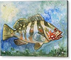Fishy Fishy Acrylic Print by Karen Casciani
