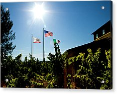 Flags At A Vineyard Acrylic Print by Terry Thomas