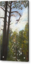 Acrylic Print featuring the painting Flagstaff Pines by Drusilla Montemayor