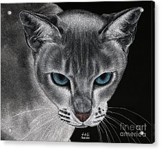 Flame Point Siemese Cat Acrylic Print
