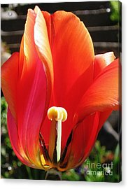 Flame Acrylic Print by Rory Sagner