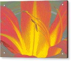 Flames Acrylic Print by Wide Awake Arts