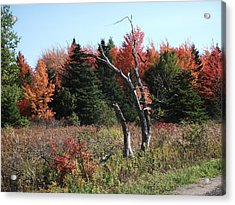 Acrylic Print featuring the photograph Flames Of Autumn by Christian Mattison
