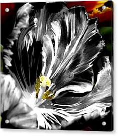 Flaming Flower 1 Acrylic Print